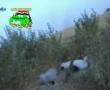 Jais Al-Nakshabandiya: Video Summary For The Releases 55,56,