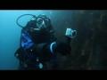 Contiki & Céline Cousteau Support Ocean Conservation