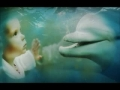 The Dolphin In The Mirror By Diana Reiss Book Trailer