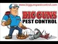 Phoenix Pest Control Experts - Big Guns Pest Control