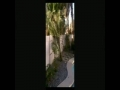 Las Vegas Landscaping Video Walkthrough