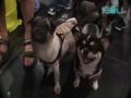 3rd HK International Pet & Aqua Accessory Expo