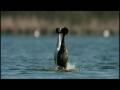 Animals In Love - Trailer