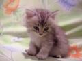 Watch Video Lovely Sleeping Cat