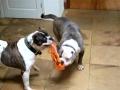 Watch Video Bulldogs Beachball